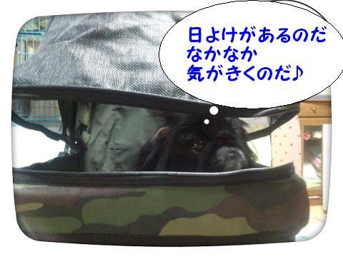 2012111509.jpg