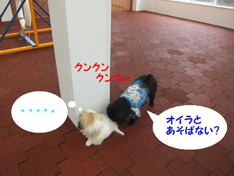 2012111715.jpg
