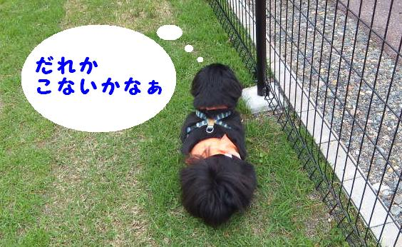 dogrun051201.jpg