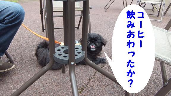dogrun051202.jpg