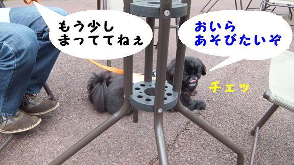 dogrun051203.jpg