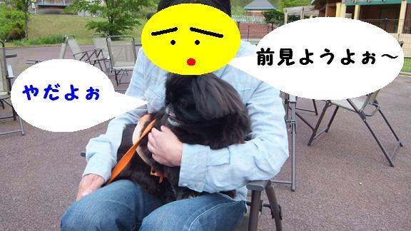 dogrun051206.jpg