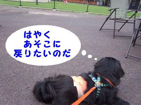 dogrun051208.jpg