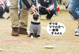 静岡組のオオトリ