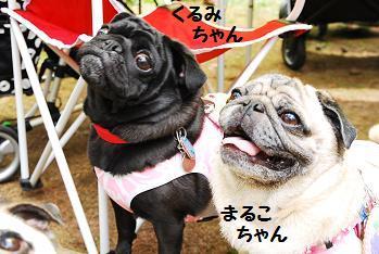 まるこちゃん&くるみちゃん