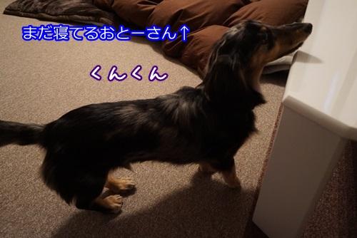 DSC06364.jpg