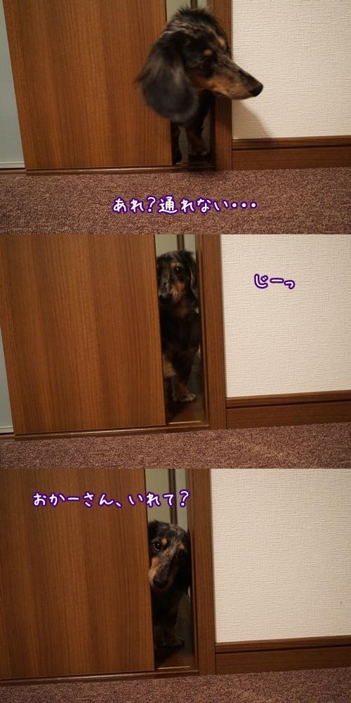 cats201411051.jpg