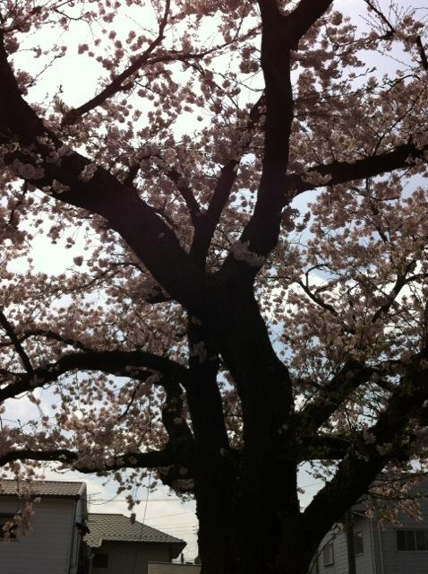 武道館近くの公園