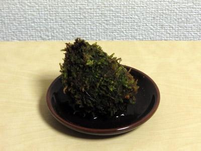 苔玉シダ10