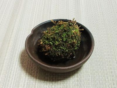 苔玉シダ13