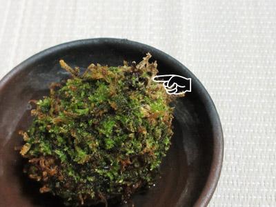苔玉シダ14