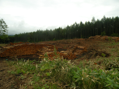 目立つ森林伐採