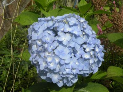 8月上旬の花