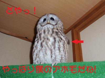 5-28-1_20120520105706.jpg