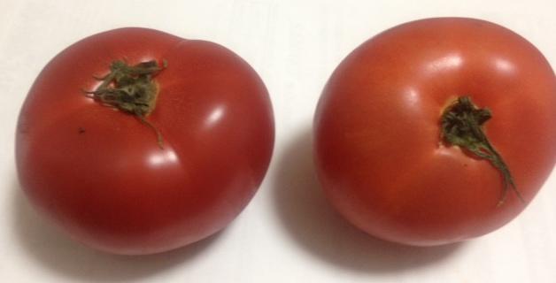トマトトマトとまと