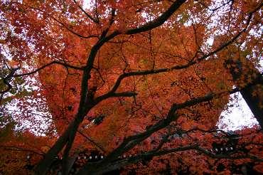 kyoto-aki03.jpg