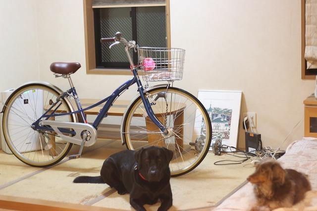マルと自転車