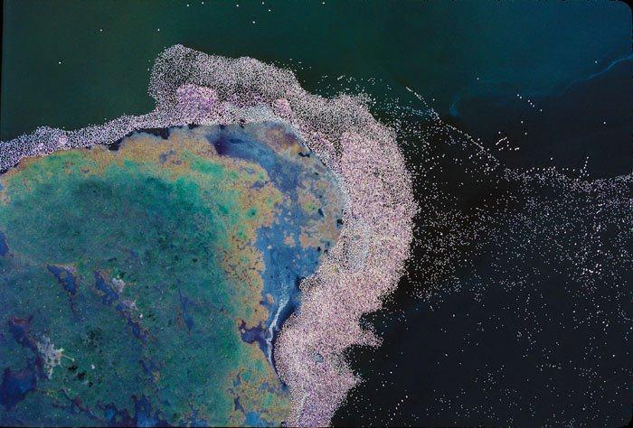 フラミンゴ