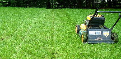 summer-lawn-care-guide-1.jpg