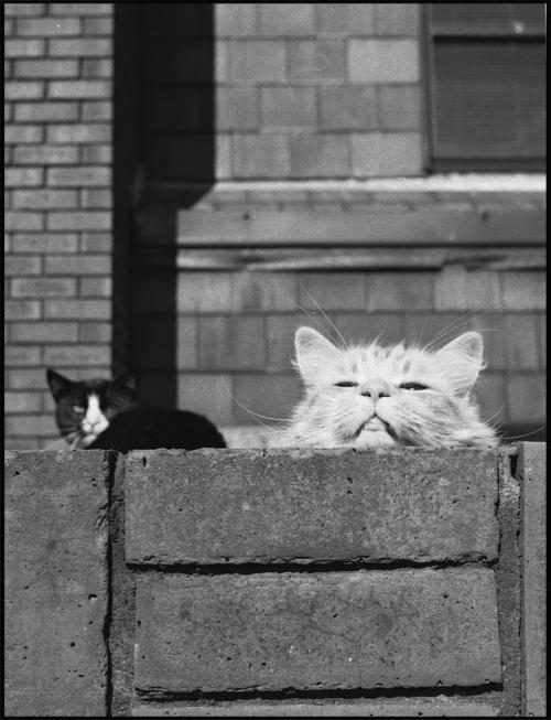 cat+2_convert_20120702085206.jpg