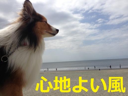 心地よい風