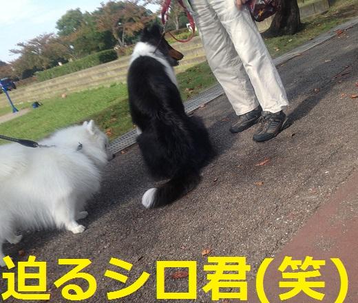 ルネちゃんマーヤちゃん3