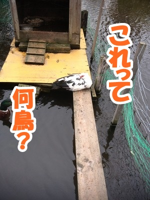 4_20121103214258.jpg