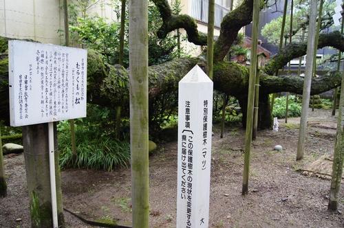 240721 八坂神社8