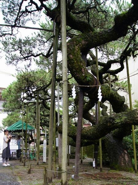 240721 八坂神社9