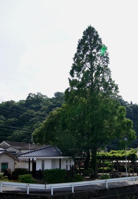 240715 佐敷薩摩街道6