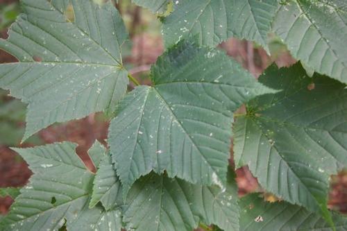 240825 タデ原湿原動植物15
