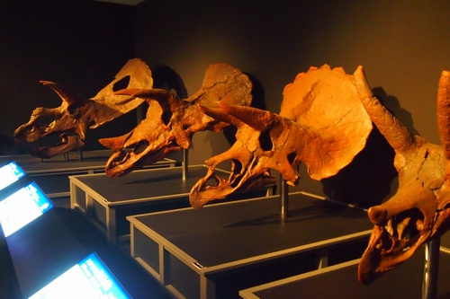240902 恐竜展5