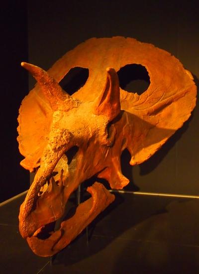 240902 恐竜展4