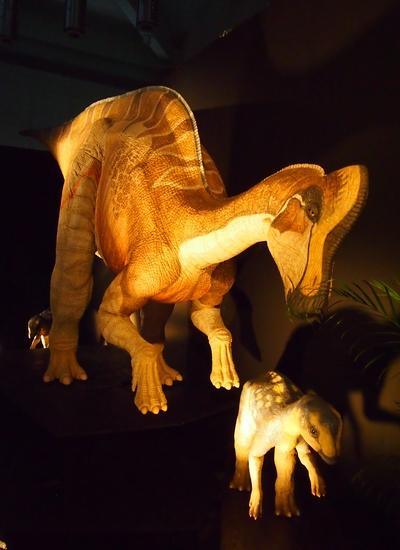 240902 恐竜展8