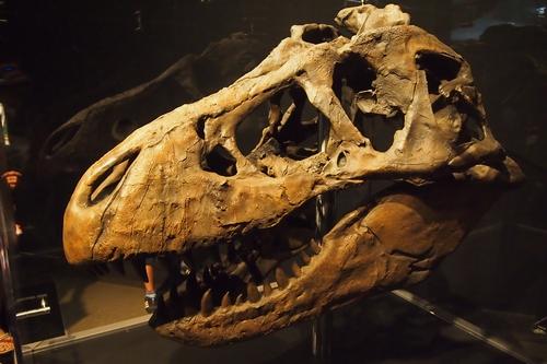 240902 恐竜展9