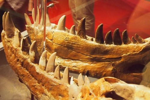 240902 恐竜展11