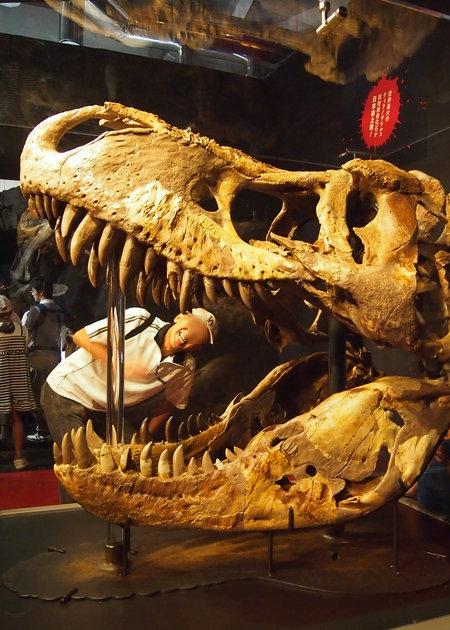 240902 恐竜展12