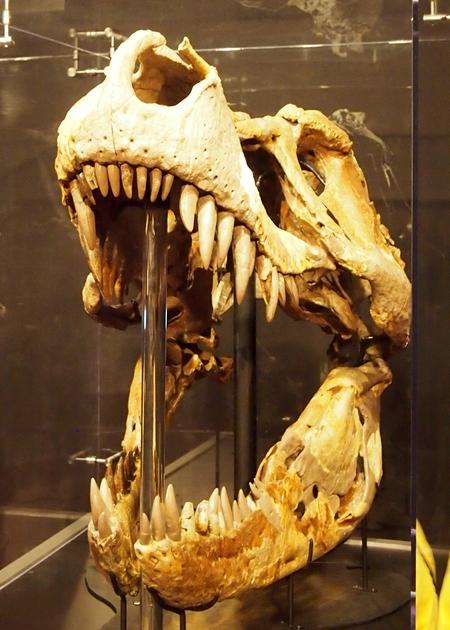 240902 恐竜展10