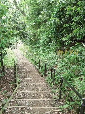 なが~い階段