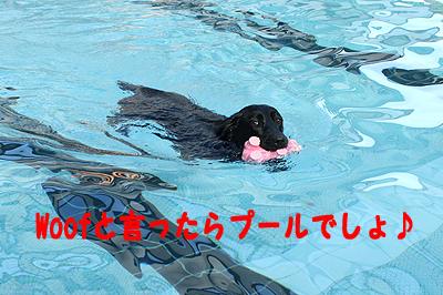 夏休みwoof10