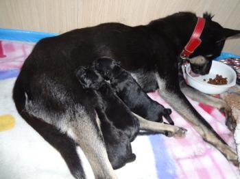 ちび出産1