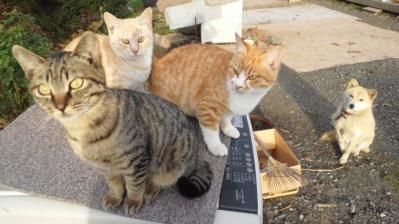 3匹のノラ