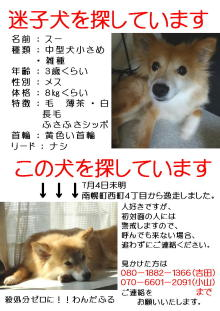 スーちゃん3