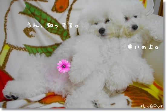 IMGP6633[1]