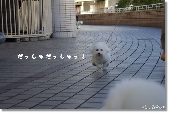 IMGP7893[1]