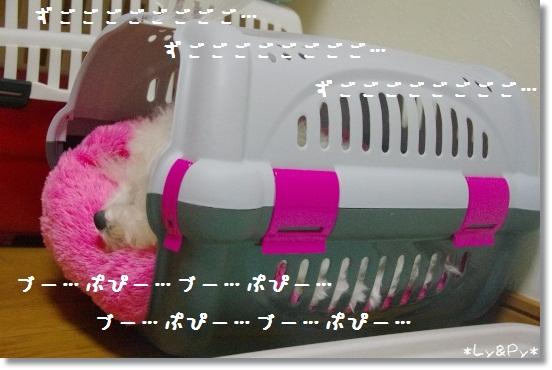 IMGP2587[1]