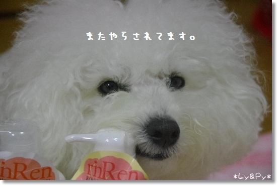IMGP2909[1]
