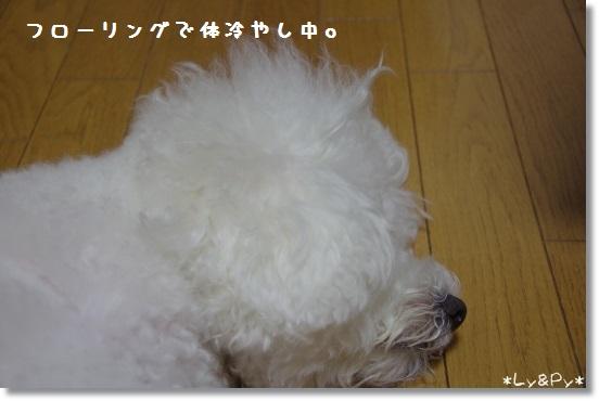 IMGP6236[1]