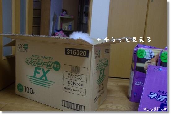 IMGP6289[1]
