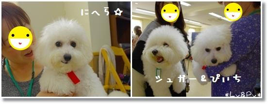 4_20121113072532.jpg